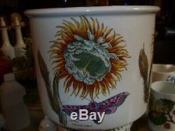 Portmeirion Botanic Garden Cereus (cactus) Rare Largest Pot Vgc+ Buy It Now