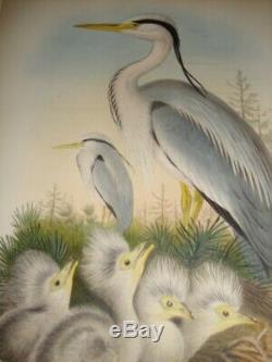 Rare Gould Birds Of Great Britain Hand Colored FOLIO Print 1870 ARDEA CINEREA